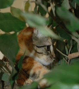 Klever Kitsu in Hiding...