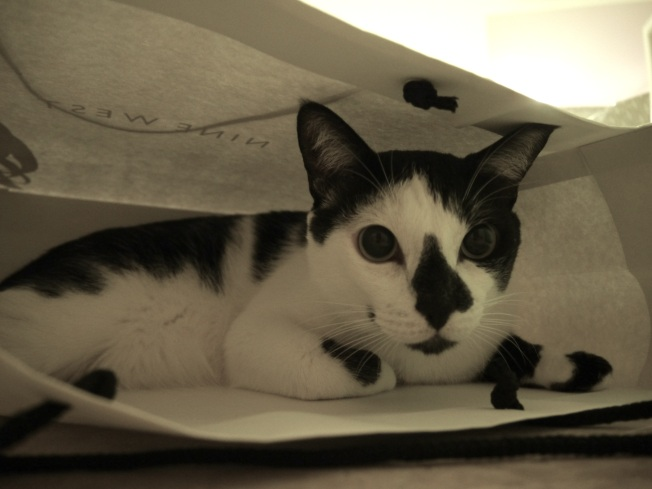 "Did someone just say, ""Let the Cat out of the Shopping Bag""?"